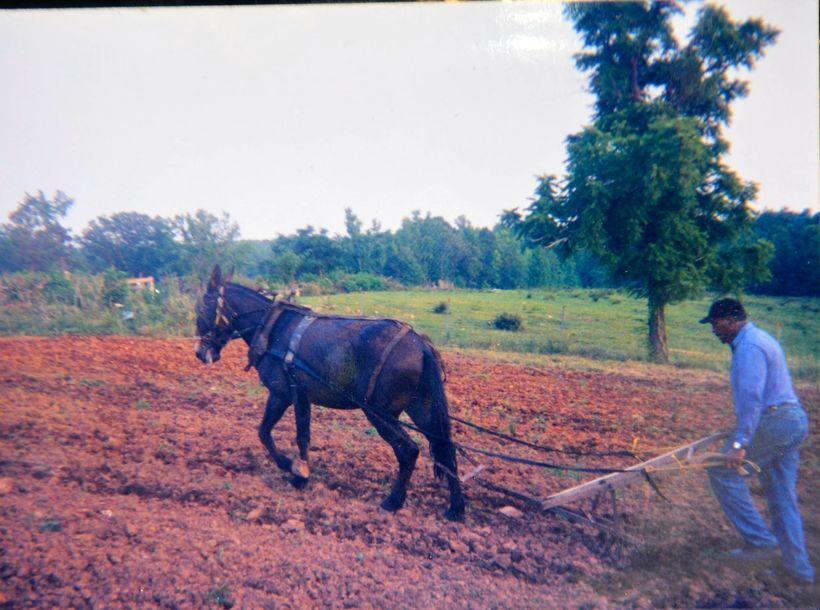 Black Farmer John Boyd Plows His Mule 40 Acres