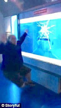 Gregory Heinzman falls backwards as a great white shark appears to crack the glass at the International Spy Museum in Washington DC