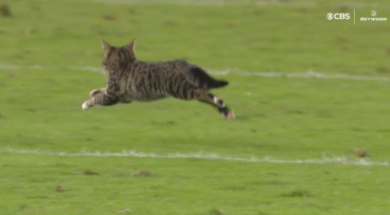 A Kitten Interrupted A Football Game And People Loved