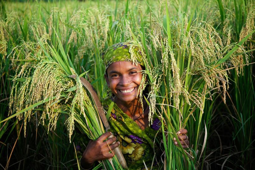 A HarvestPlus farmer in Bangladesh displays her high zinc rice crop.