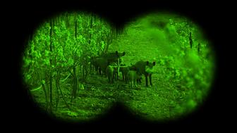 In Texas one company touts the use of night-vision gear for hunting feral hogs