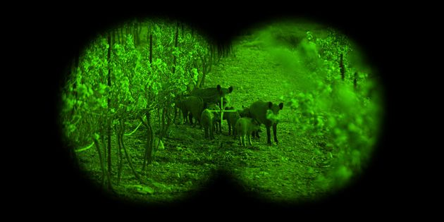 Military-Grade Night Vision Gear Is Widely Available To Civilians -- And That's A