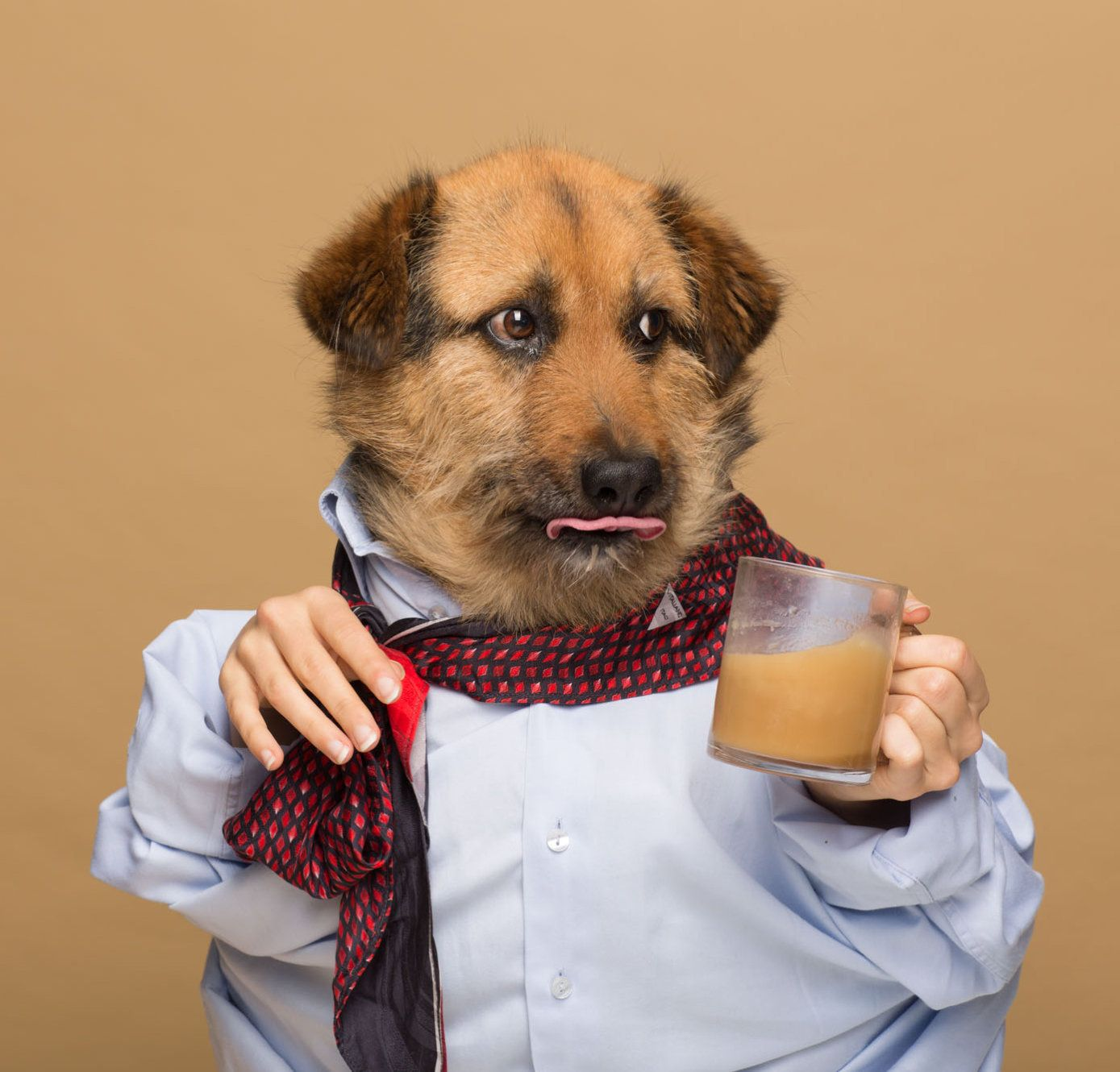 """Crete, one of Agota Jakutyte's dogs, poses for an ad for """"Rooffee."""""""