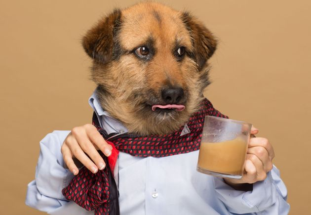 Crete, one of Agota Jakutyte's dogs, poses for an ad for