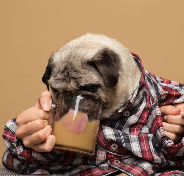 Ferdinando the pug poses for a Rooffee