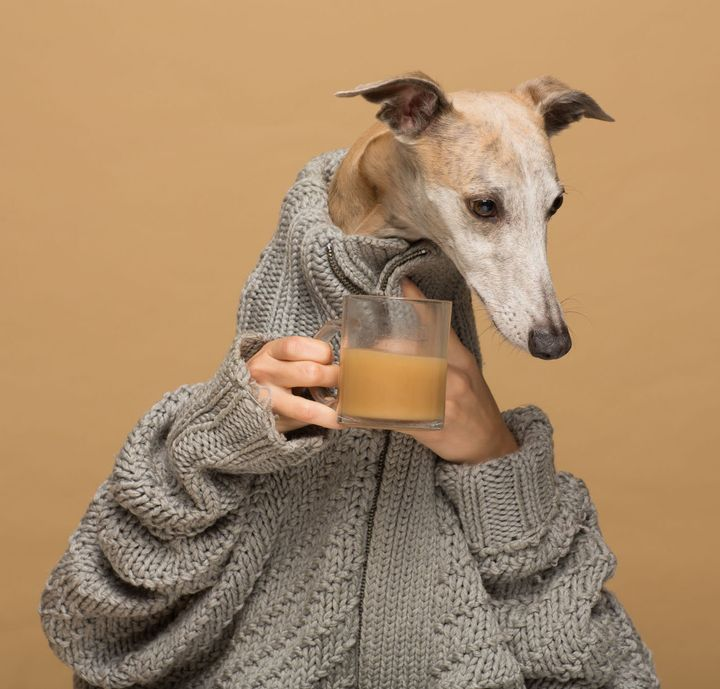 Clemence the dog poses for a Rooffee ad.