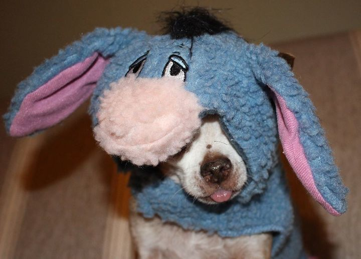 Harley as Eeyore (again)!