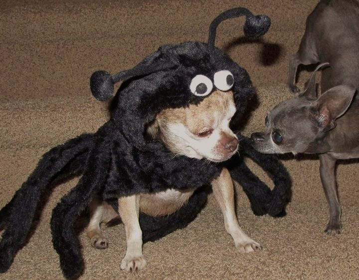 Harley was a (not so) scary spider