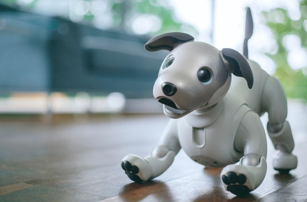 We Compared Sony's New Robot Dog To The Real