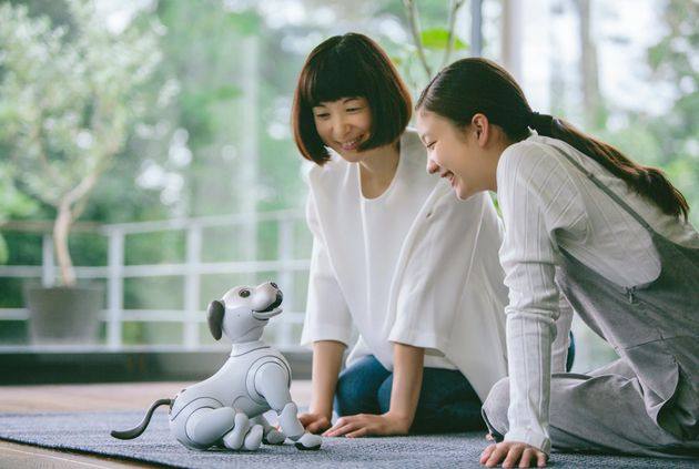 We Compared Sony's New Robot Dog To The Real Thing, Guess Which Version