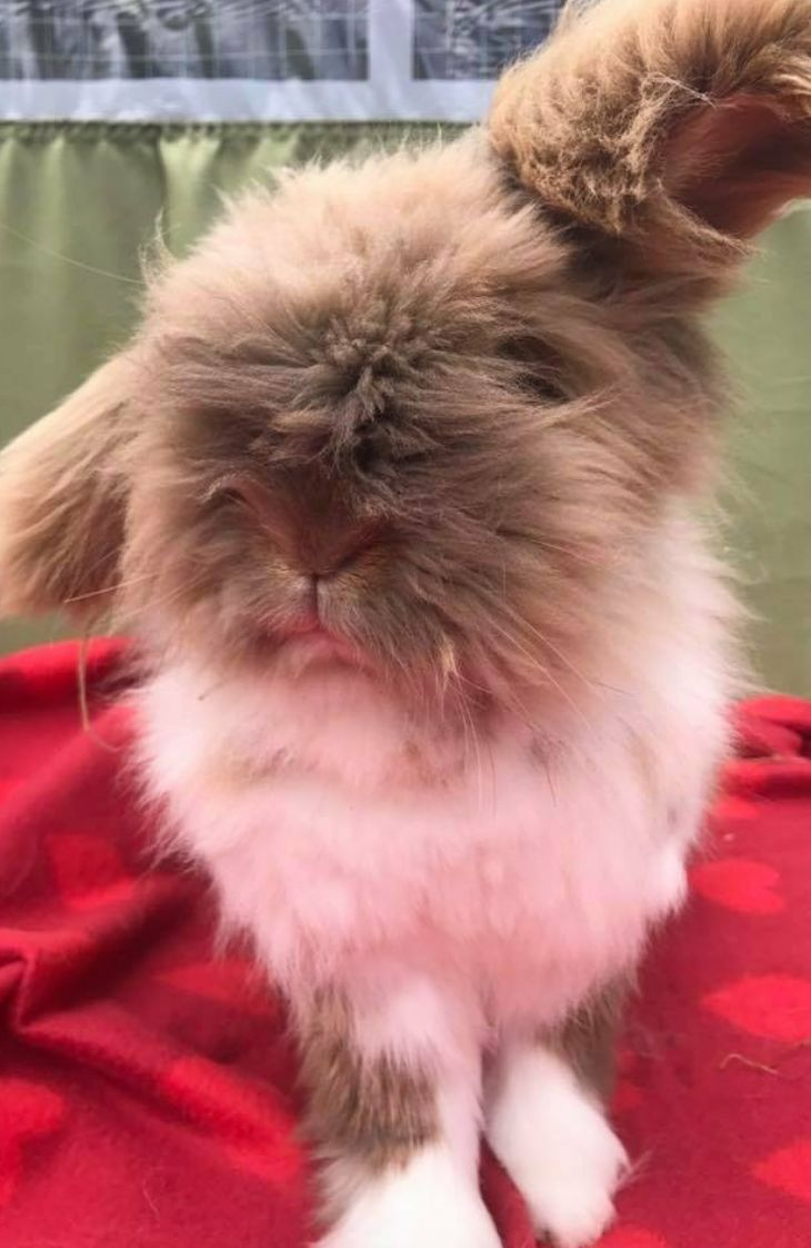 <strong>Teddy the rabbit's mutilated body was found by his family earlier this week.</strong>