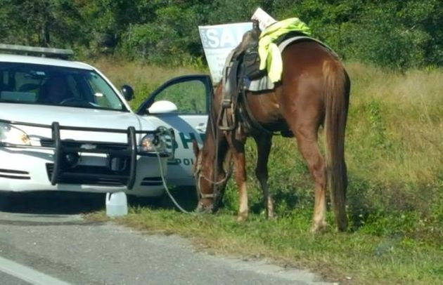 Polk County Sheriff's Office deputies pulled Donna Byrne over as she riding her horse, pictured, on Thursday