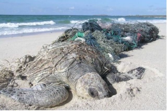 <p>Australia's Gulf of Carpentaria has some of the largest sea turtle nesting areas in the Indo-Pacific region.</p>