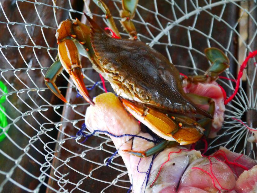 St. Simons Island Pier Crabs