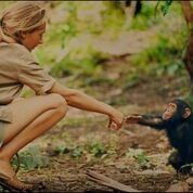 Jane with a baby chimp