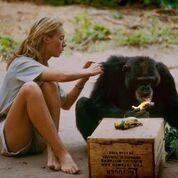Jane Goodall and Chimpanzee