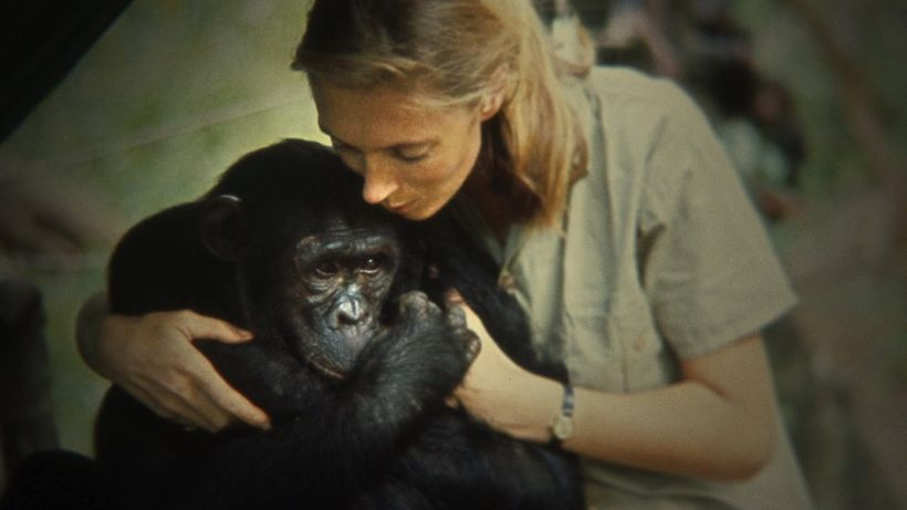 Jane Goodall and one of her chimps