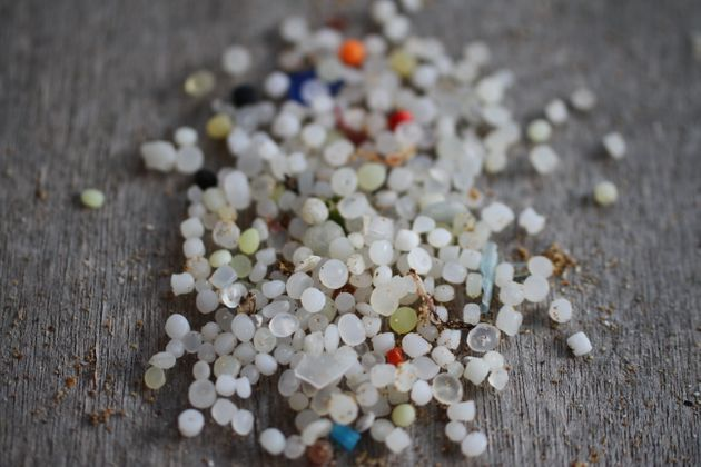 Nurdles, seen here, are small plastic pellets that pollute beaches and kill sea