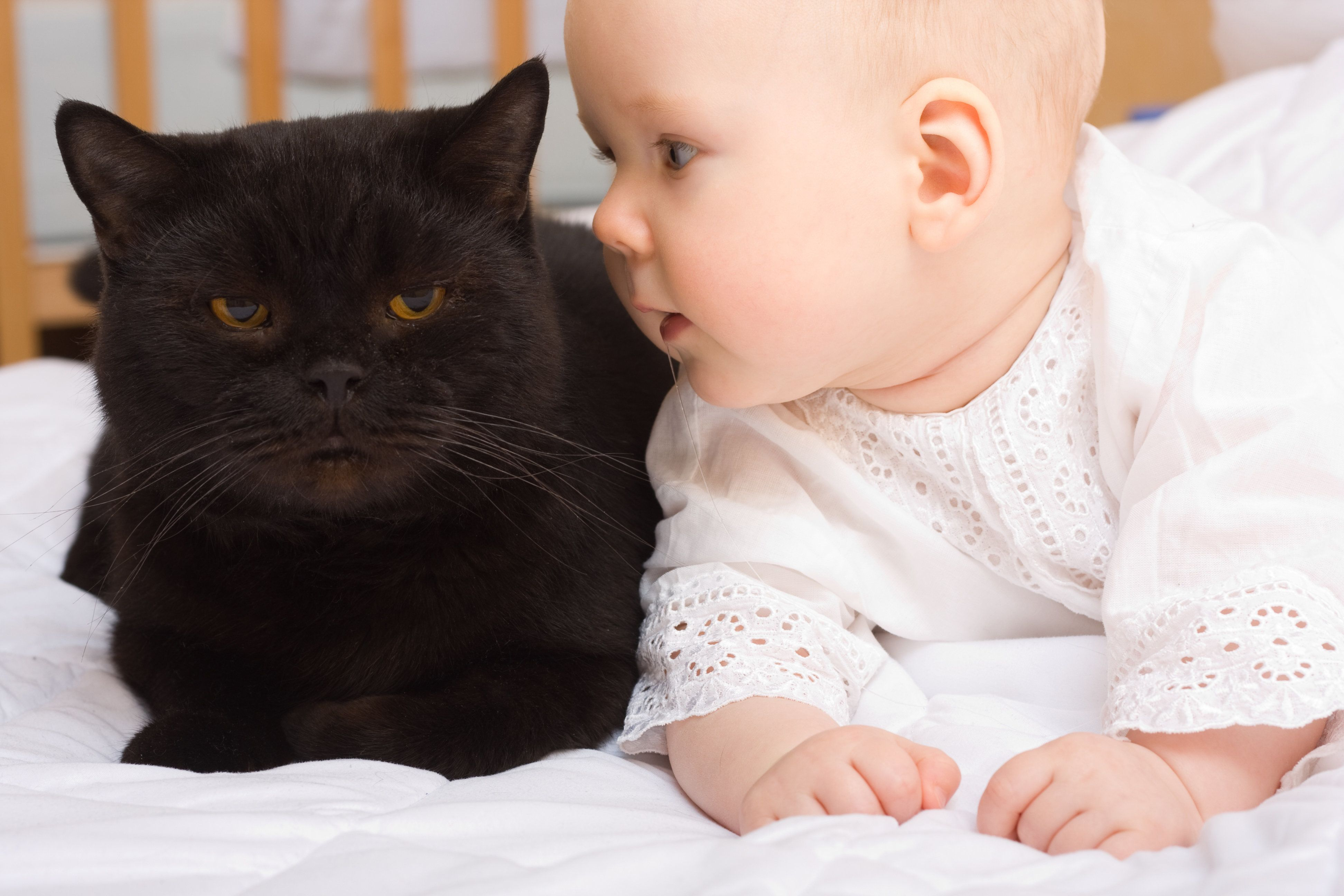 Cats May Protect Newborn Babies Against Asthma, New Study