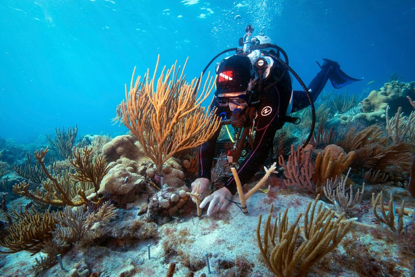 The Nature Conservancy is working to restore healthy coral reefs along Florida's unique reef track that runs between the Dry