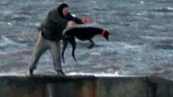 Hunt For Men Who Repeatedly Hurled Terrified Greyhound Into The