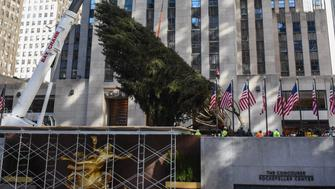 NEW YORK, NY - NOVEMBER 11: A crane hoists the Rockefeller Center tree upright on November 11, 2017 in New York City. The 75-foot Norway Spruce from State College, Pennsylvania will become the 86th Christmas tree to grace the plaza. (Photo by Stephanie Keith/Getty Images)