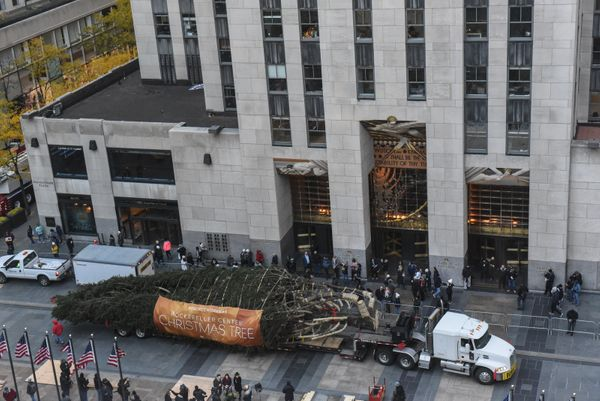 The Rockefeller Center tree arrives in Manhattan on a truck.