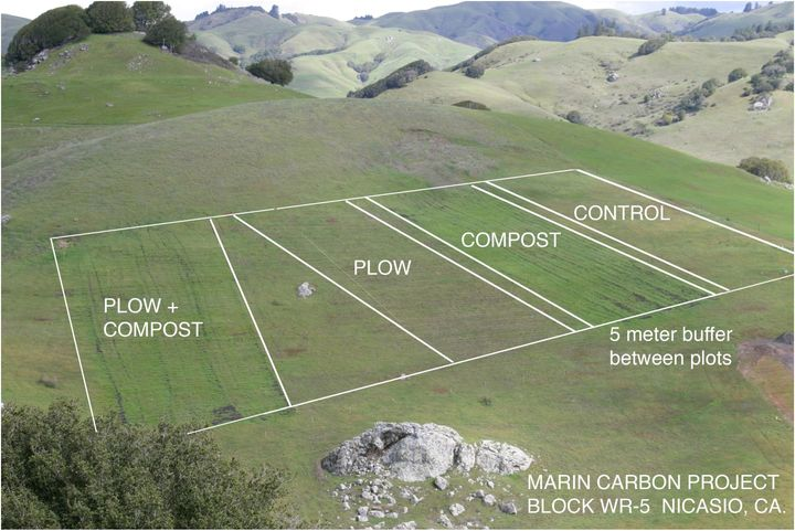 One of several blocks of research and control plots on the Nicasio Native Grass Ranch. This block compares the effects of com