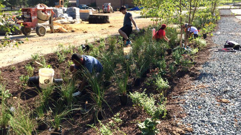 <em>Planting a rain garden in a church parking lot as part of D.C.'s stormwater runoff project.</em>