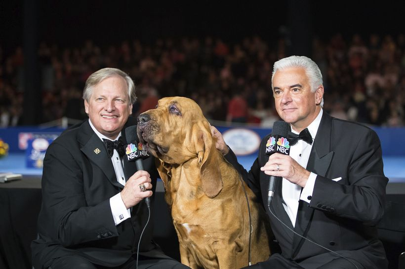 David Frei (Left) and John O'Hurley (right) and Nathan the bloodhound, the 2015 Best In Show.