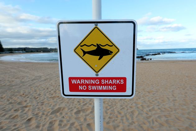 Avoca beach was closed after a surfer was