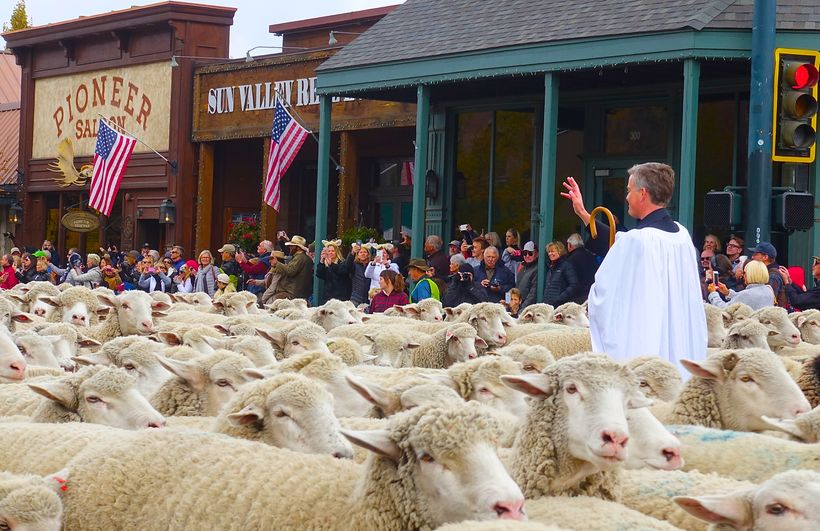 Father Kenneth Brannon blesses 1500 sheep as they parade down Main Street.