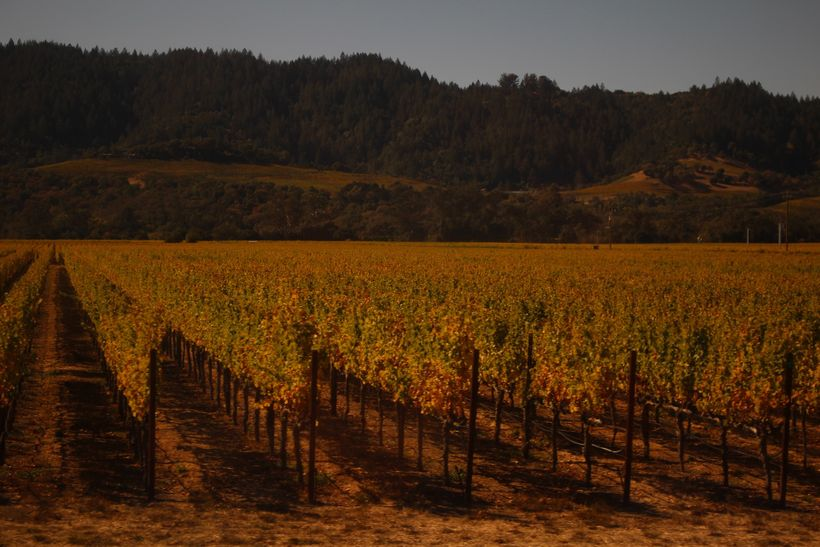 Welcome to California wine country in the Napa Valley