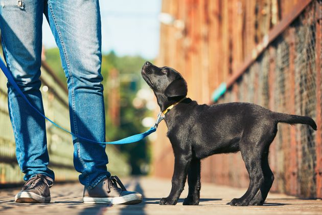 Want a Longer Leash on Life? Get a Dog