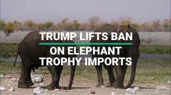 Trump Reverses Ban On Elephant Trophy Imports