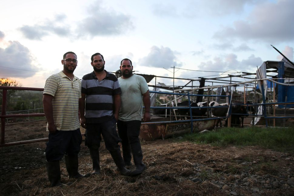 From left, Yamil, Rubén and Jonathan González Echevarría stand in their dairy farm.