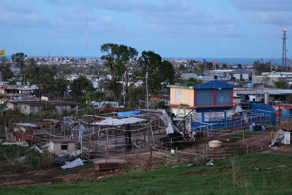 The González Echevarría brothers' dairy farm was battered by Hurricane Maria.