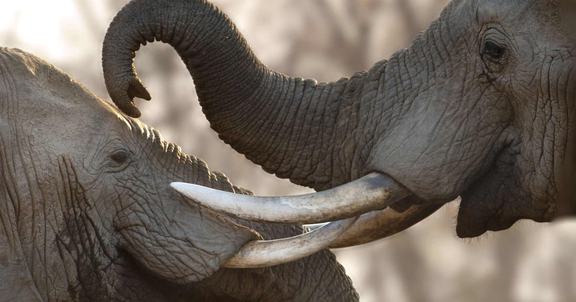 Facing Public Outrage, Trump Puts Elephant Trophy Decision 'On Hold'
