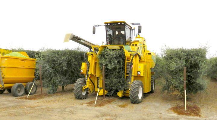<em>Machines specially designed to harvest green olives.</em>