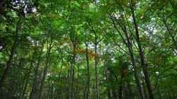 Forest Bathing - From Japan to Norfolk, With