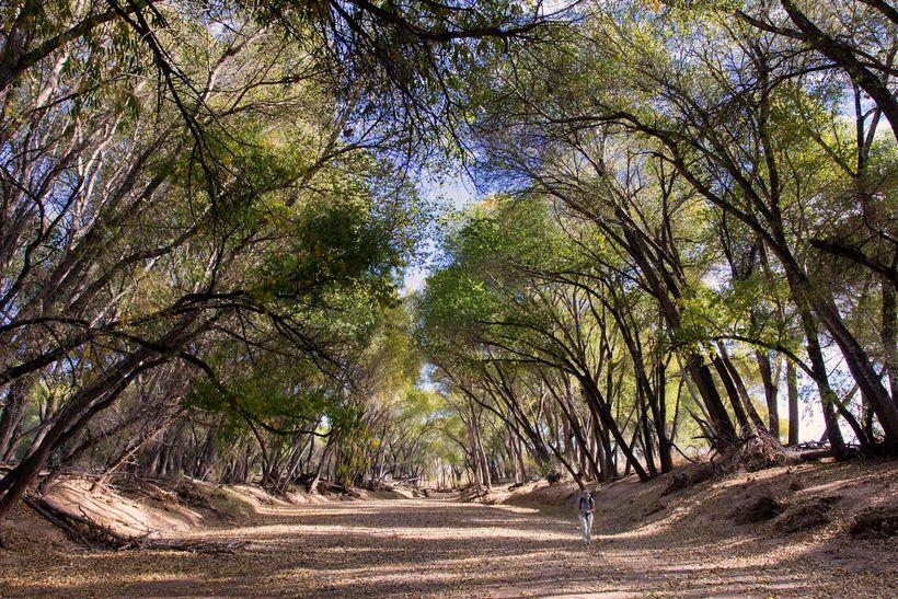 The dry river in Palominas, Arizona