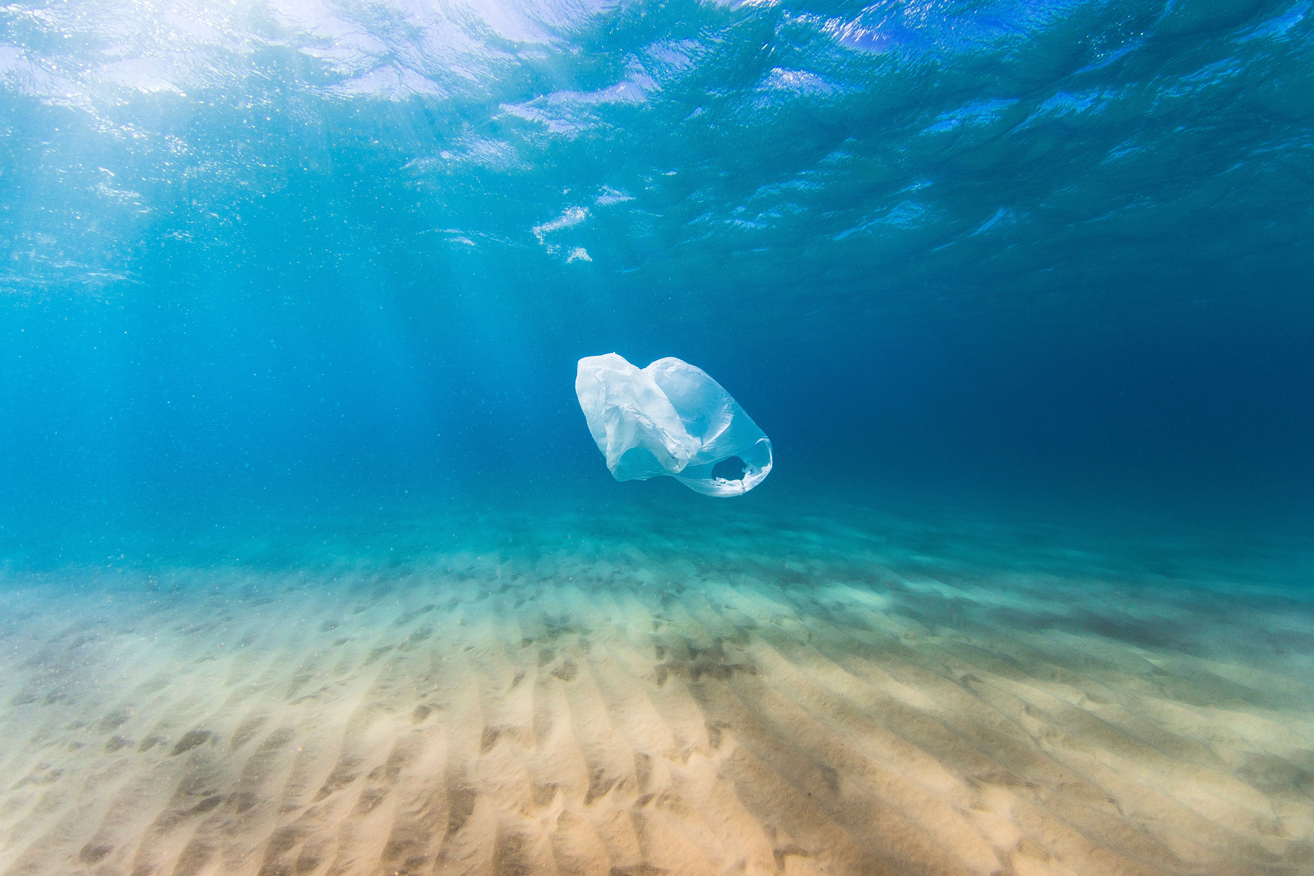 Blue Planet Made You Feel Guilty About Plastic Pollution? These Scientists Could Have The