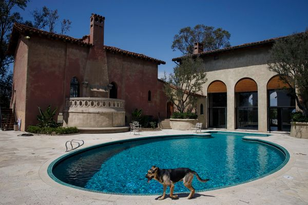A dog walks past the sparkling blue swimming pool.