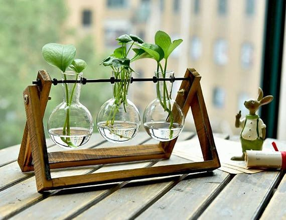 """Get it <a href=""""https://www.etsy.com/listing/536457512/simple-glass-vase-set-water-plant-vase?ref=cyber_subcategory"""" target="""""""