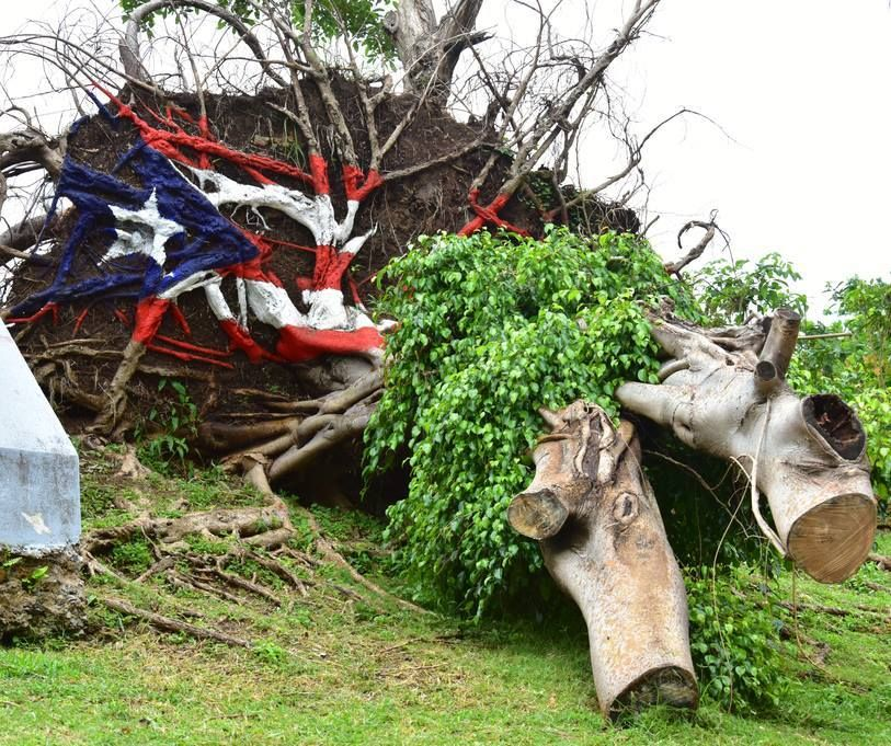 A fallen tree in Old San Juan with the Puerto Rican flag painted by local artist and poet, Lady Lee Andrews.