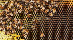 Why Rooftop Beekeeping Is The Latest Trend In Protecting Our