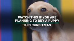Watch This If You're Planning To Buy A Puppy This