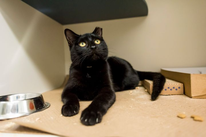 Oyster, one of many cats looking for a home at the ASPCA adoption center in New York City.