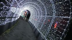 Christmas At Kew Gardens - If It's The Only Time, Visit At