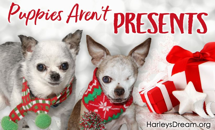 The purchase of a puppy as a Christmas gift is typically an impulse buy. It's irresponsible. A majority of these puppies end